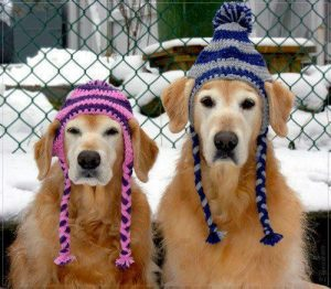 Dogs in hats phase 2